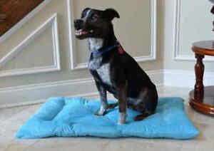 Armarkat-Soft-Sky-Blue-Velvet-Dog-Pet-Bed-Mat-Washable-LARGE