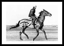 Red Rum Training Gallop 1978 Horse Racing Photo Memorabilia (204)