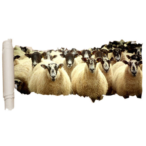 Wall Stickers Sheep Herd Farm Animals Hall  Vinyl Bedroom Girls Boys Scroll C626