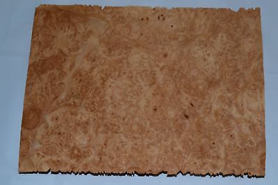 Maple Burl Raw Wood Veneer Sheets 6.5 x 9 inches 1//42nd thick            9212-42