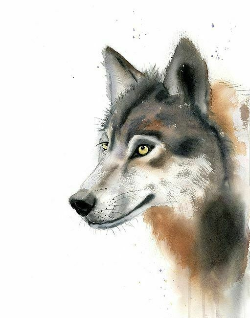 Olga Shefranov  Wolf Keilrahmen-Bild Leinwand Wild-Tiere Aquarell modern grau