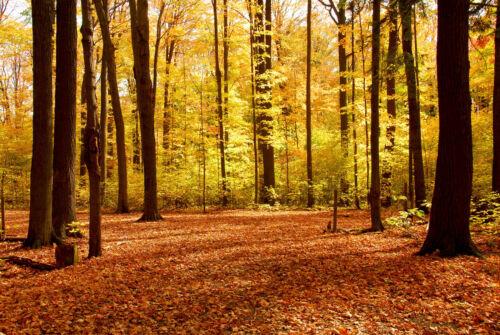 Nappes Papier Peint-Forêt 427 V Arbres Soleil automne pierres Prairie Montagnes Herbe Fleur