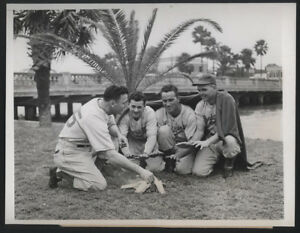1946-Orig-DODGER-Press-Photo-Pity-Poor-Dodgers-In-Bleak-Florida