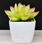 Artificial-Succulent-Plants-Small-Fake-Succulent-Bonsai-Garden-Miniature-Decor thumbnail 13