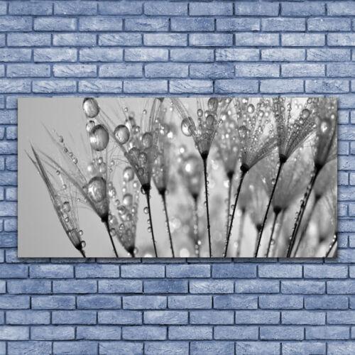 Glasbilder Wandbild Druck auf Glas 140x70 Pusteblume Pflanzen