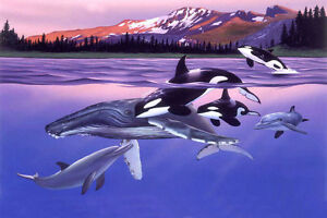 Details about NATURAL SOUNDS DOLPHIN & WHALE SONG CD, NO MUSIC, RELAXATION,  PEACEFUL AMBIENCE