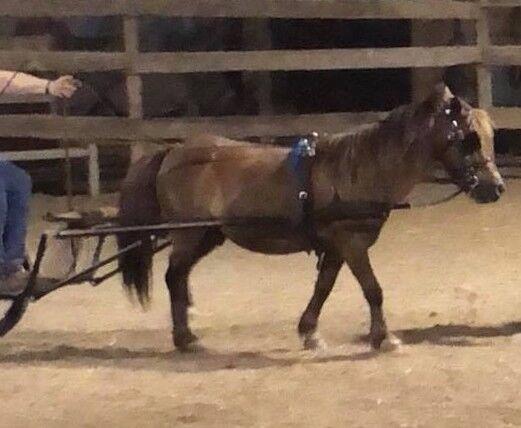 Synthetische Biothane Mini Miniature Horse Shetland Pony Driving Harness w Bit USA