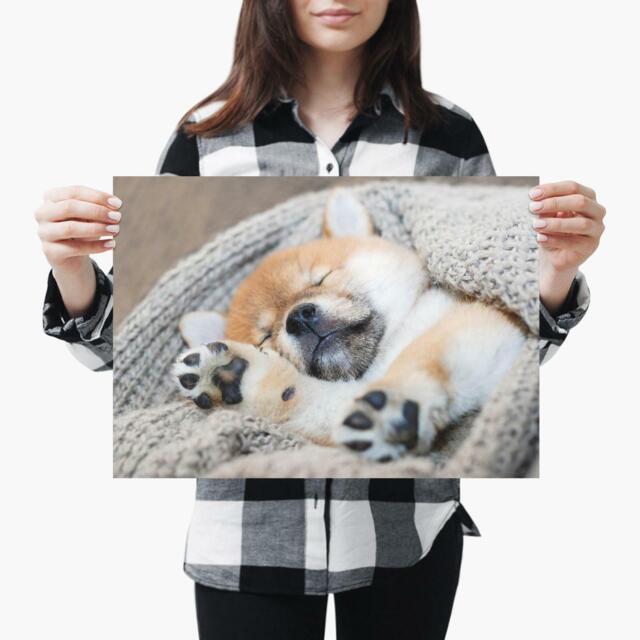 Sleepy Shiba Inu Little Puppy Dog Size A3 Poster Print Photo Art Gift #2704 A3