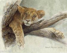 Robert BATEMAN Up A Tree Lion Cub GICLEE on Board LTD art Clas Art COA