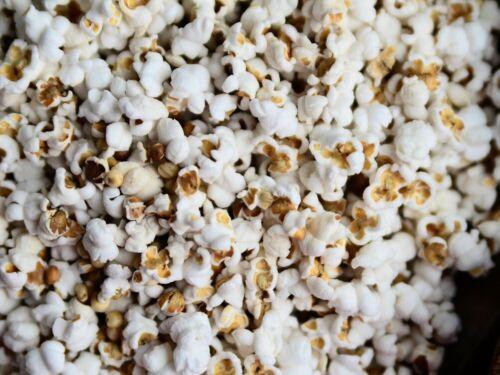 Gluten Free White Popping Sorghum Seeds 1oz Package 2019 Harvest Broom Popcorn