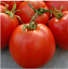 Organic-Garden-Vegetable-Seeds-NON-GMO-Heirloom-Seed-79-Varieties-NON-Hybrid thumbnail 85