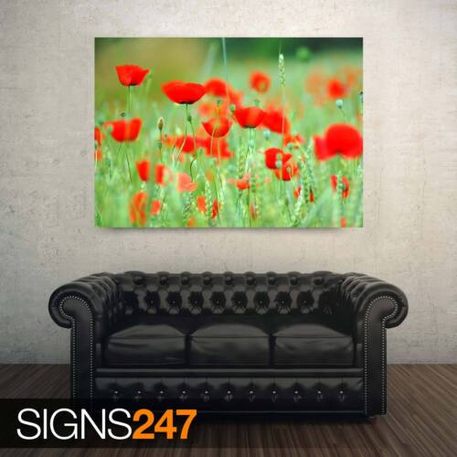 AD877 SPRING POPPIES NATURE POSTER Photo Picture Poster Print Art A0 to A4