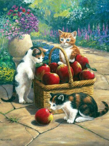 Malen nach Zahlen Katzen bei der Apfelernte Tiermotiv Komplettset  22cm x 29 cm