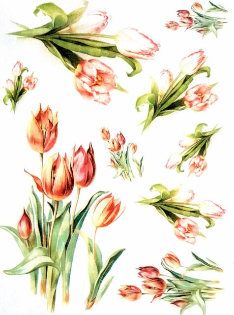 Rice Paper - for Decoupage - Tulips - Sheet - Scrapbooking - A4