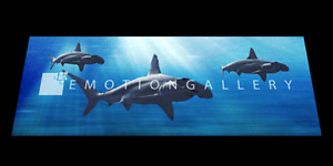 HAMMERHEAD-SHARKS-3D-MOTION-BOOKMARK-BY-EMOTION-GALLERY-BM-024