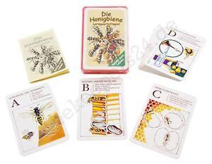 """Quartettspiel/""""Die Honigbiene /""""Bienen Produkte"""