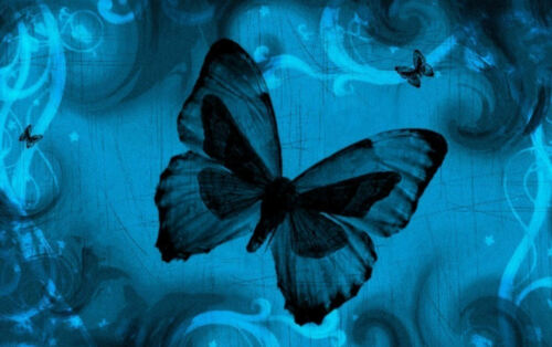 Picture Poster Black and Blue Butterflies on a Blue Background Framed Print