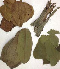 Blätterset: Seemandelbaum, Banane, Guave, Maulbeer > für Garnelen, Krebse & Co