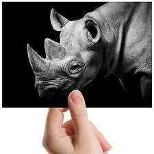 "Wild Rhino Zoo Endangered Small Photograph 6/"" x 4/"" Art Print Photo Gift #8578"