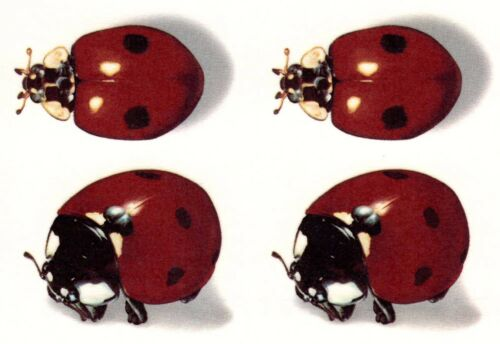 Ladybug Lady Bug Ladybird Red Black Select-A-Size Waterslide Ceramic Decals Xx