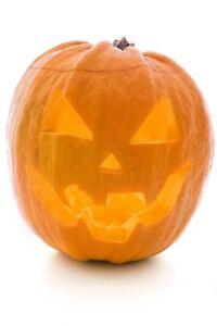 Pumpkin-Jack-O-Lantern-Non-GMO-Heirloom-Vegetable-Seeds-Sow-No-GMO-USA