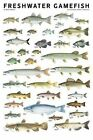 Freshwater Gamefish of North America Poster by Joseph R. Tomelleri 9780982510230