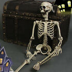 Life Size Realistic Skeleton Halloween Decor Scary Skull Man Bone Creepy Prop
