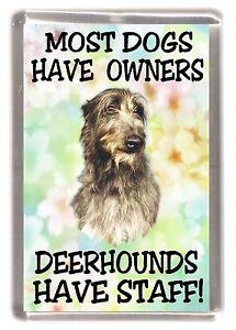 "Irish Wolfhound Dog Fridge Magnet /""Dog is such a small word...../"" by Starprint"