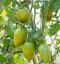 Lucky-Tiger-Heirloom-Tomato-10-Seeds