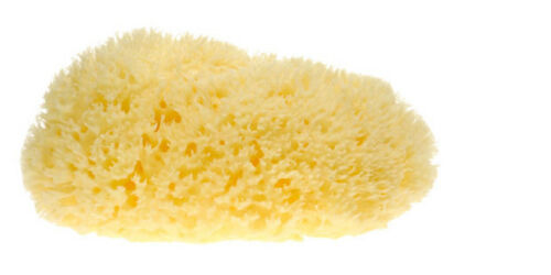 10 Large Natural Sea Sponges for Artists Crafts Painting pottery stippling