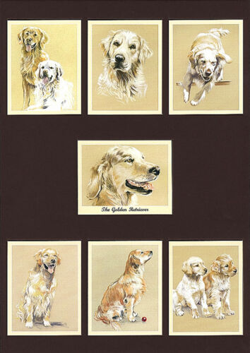 THE GOLDEN RETRIEVER Man/'s Best Friend Dog Breeds Perikim Collectors Card Set