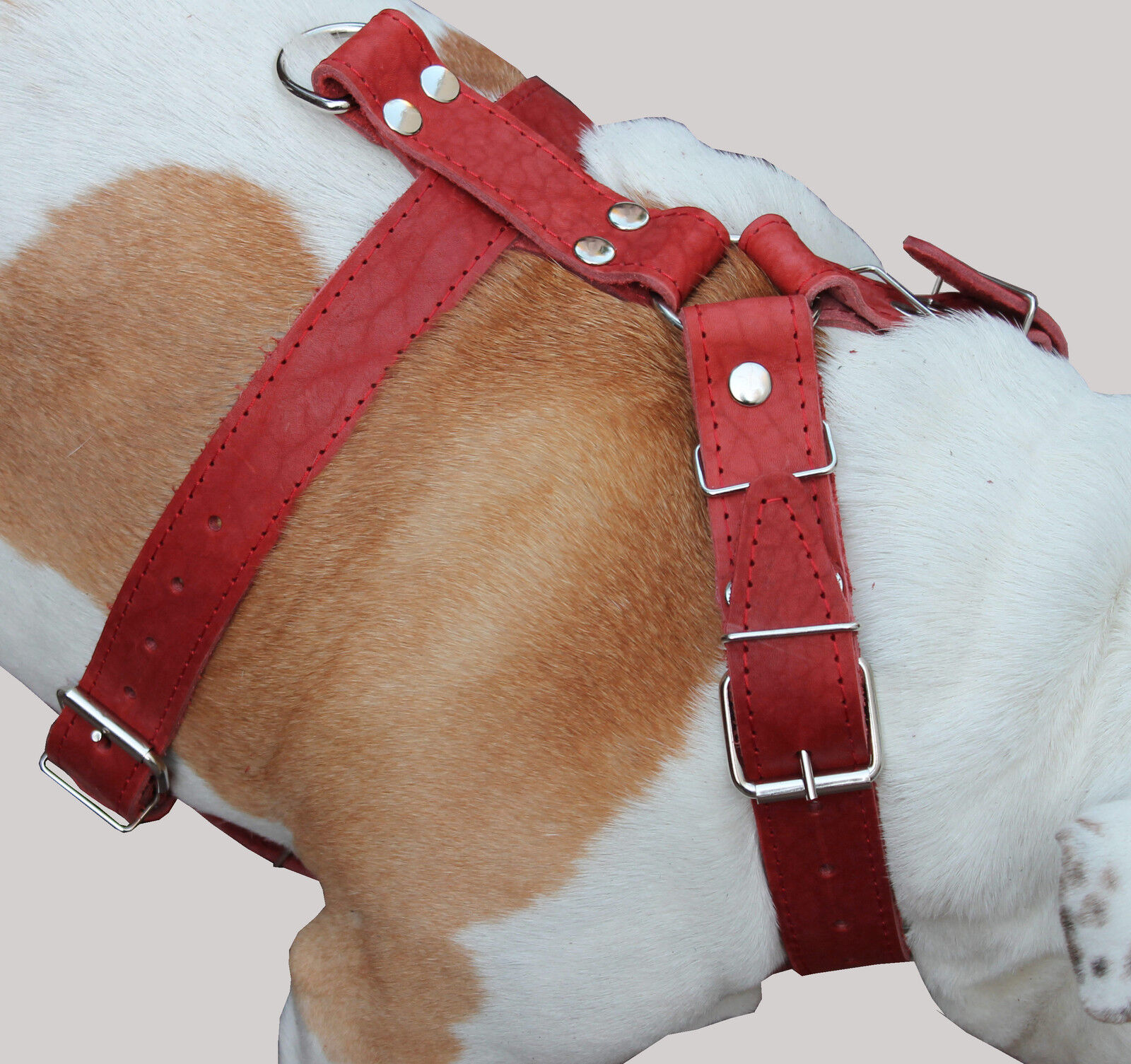 High Quality Leather Walking Dog Harness 33 -37  chest Cane Corso Mastiff Boxer
