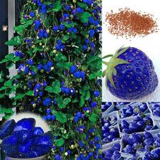 100x Black Finger Grape Seeds Delicious Fruit Plant Garden Bonsai Roof Decor Mgi