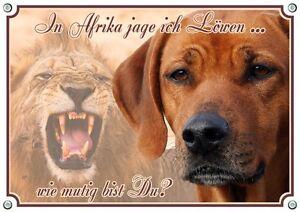 Rhodesian Ridgeback - Avertissement De Panneau De Protection De Chien En Métal Dog Sign Up To Din A3 Order