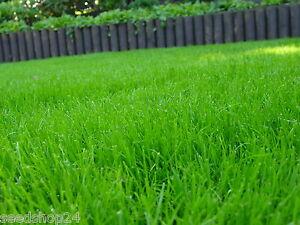10-kg-Schattenrasen-Rasensamen-Rasensaat-Grassamen-Rasen-Gaertnerqualitaet