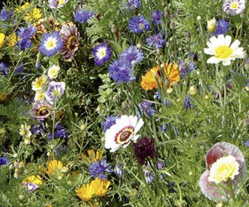 Sommerblumen Schattenblumen Mischung Samen