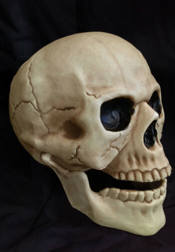 Life Size Skull Prop Moveable Jaw Scary Skeleton Halloween Decoration 20CM NEW