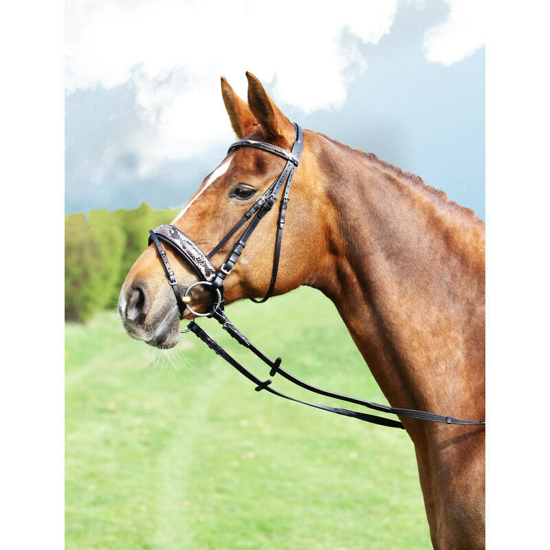 Euroriding Bridle Snake  Print, British Line  cheap online