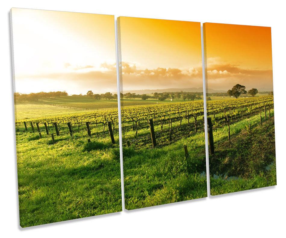 Summer Vineyard Sunset Landscape TREBLE CANVAS WALL ART Box Framed Picture