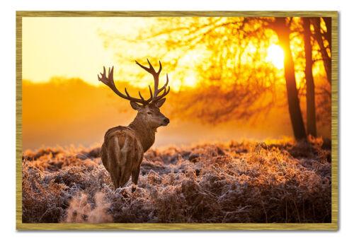 Framed Golden Stag Sunrise Poster New
