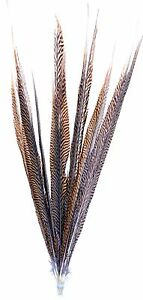 "Golden Pheasant Tail Feathers Natural Barred 12 Pcs 20""-25"" Long Crafts Hat 146s"