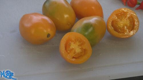 Orange Banana Paste TomatoSolanum lycopersicum10 seeds HRSeeds.com