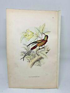 DELUXE-ED-Hand-colored-Plates-1840-Jardine-History-Hummingbirds-24-Topaz-Throat