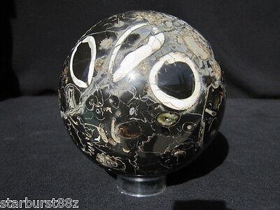 """4"""" FOSSIL AMMONITE SPHERE RARE MULTI COLOR FLUORESCENT BALL RUSSIA 101.8 mm"""