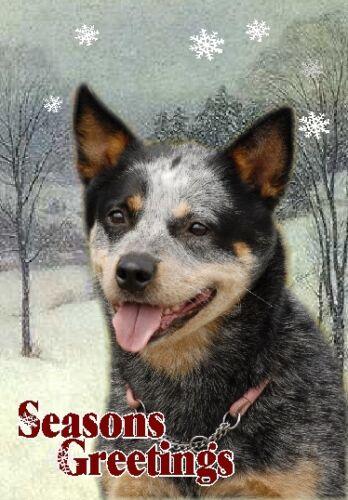 Australian Cattle Dog A6 Christmas Card Design XAC-3 by paws2print