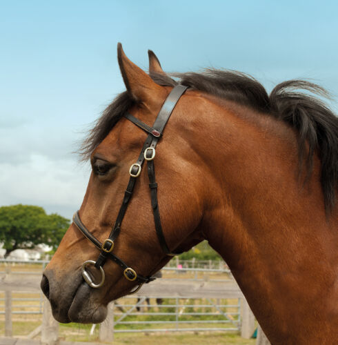 Windsor Equestrian Leather In-Hand Bridle Black or brown all sizes