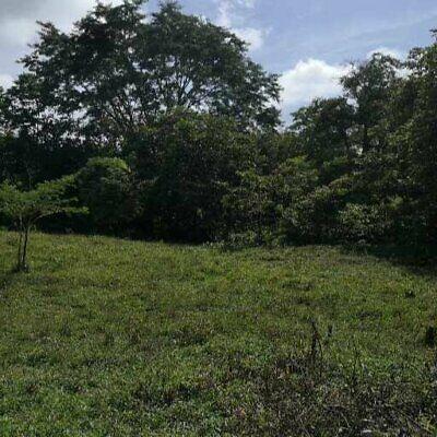 Venta de 6 hectareas en zona urbana en Palenque  Chiapas