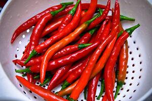 Bien Pimiento Cayenne Cayena Picante Pepper 150 Semillas Frescas
