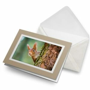 Greetings-Card-Biege-Little-Red-Squirrel-Woods-Forrest-16883