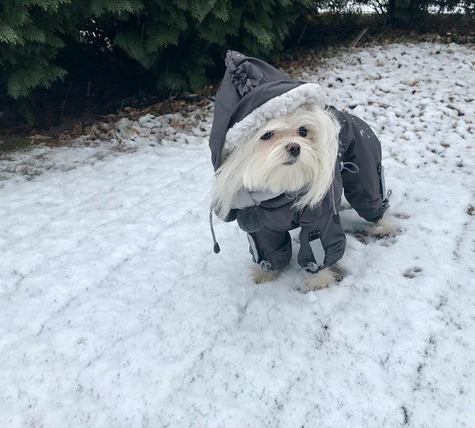 FROST  Wintermantel Schneemantel,Hundemantel,Mantel für für für Hunde mit D-Ring     Hervorragende Eigenschaften  b6a5c5